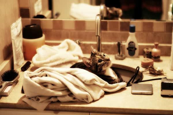 4 Consejos de fontanería para propietarios de mascotas